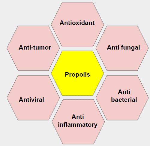 Propolis Nedir ve Nasıl Kullanılır