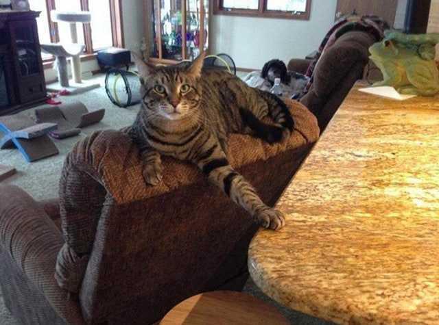 Kedilerin Komik Fotoğrafları