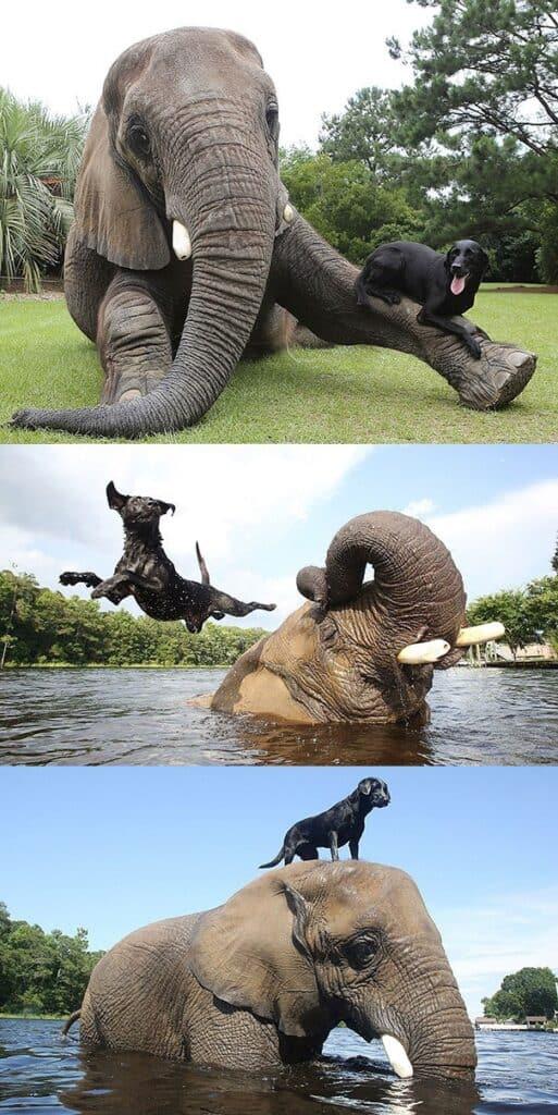 Sıra Dışı Hayvan Dostlukları